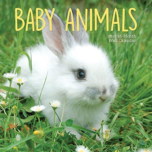 Avalon 2018 Baby Animals Wall Calendar  16 Month Calendar 12 x 12 inches 83038