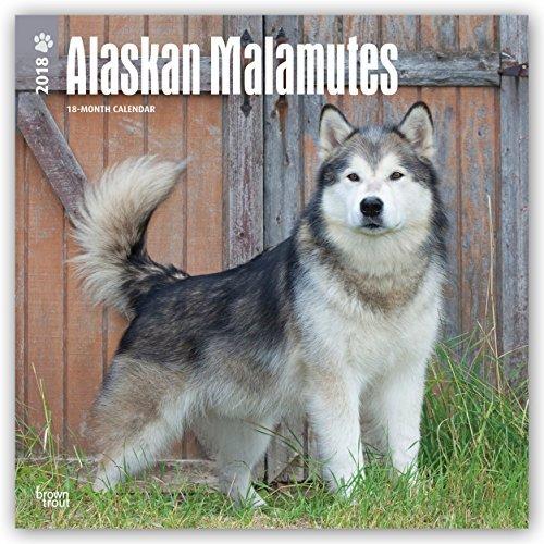 Alaskan Malamutes 2018 Monthly Square Wall Calendar