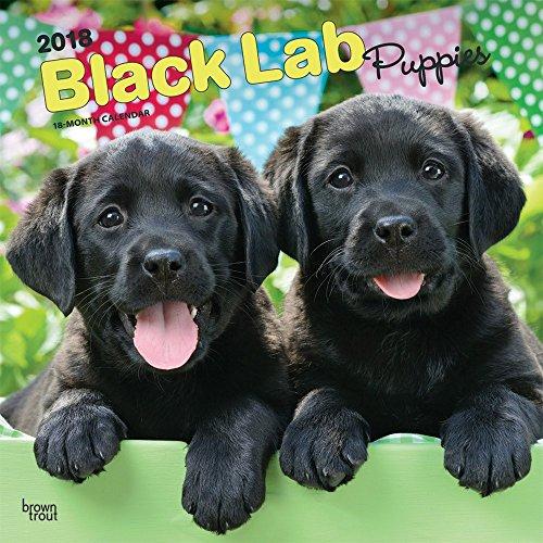 Labrador Retriever Puppies Black 2018 Monthly Square Wall Calendar