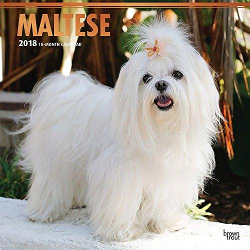 Maltese 2018 Monthly Square Wall Calendar FOIL