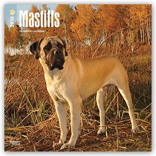 Mastiffs 2018 Monthly Square Wall Calendar