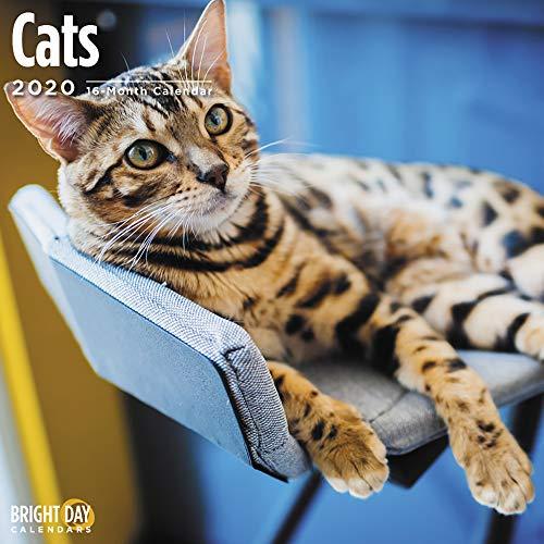 2020 Cats Wall Calendar by Bright Day 16 Month 12 x 12 Inch Cute Kitten Animals Feline