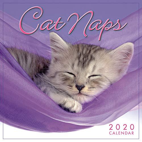 Cat Naps 2020 Mini Calendar