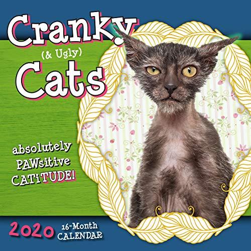Cranky Ugly Cats 2020 Calendar Absolute Catitude