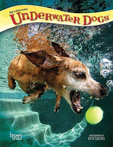 Underwater Dogs 2018 Engagement Calendar